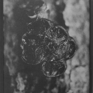 Dries Segers, fungi