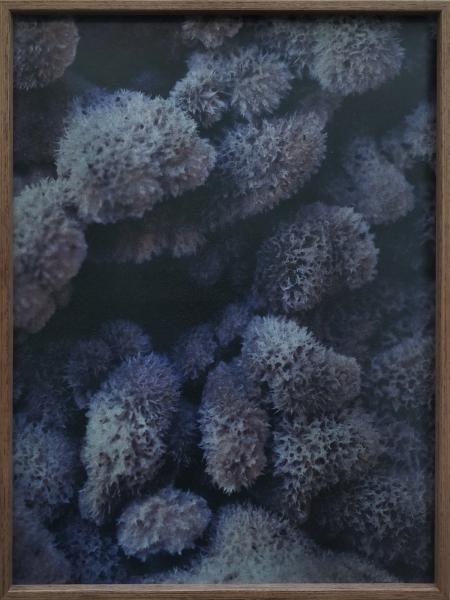 Dries segers, dmw art space, fungi