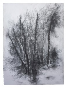 joris vanpoucke, dmw gallery, birch forest
