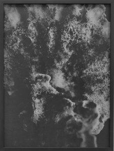 dries segers, dmw gallery, fungi