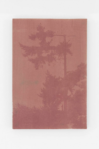 dries segers, dmw gallery, edition, anthotype