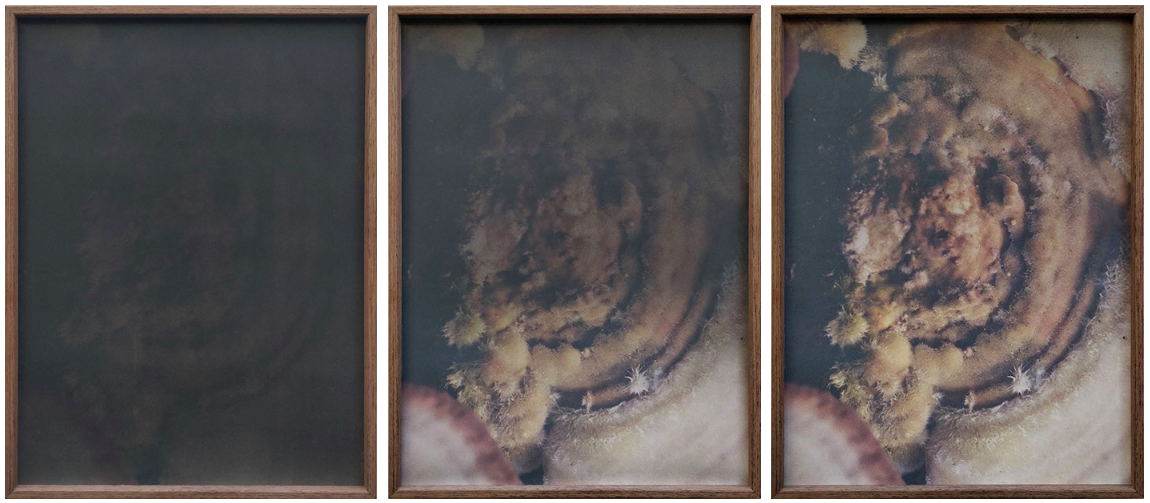 dries segers, fungi, dmw gallery, 2019