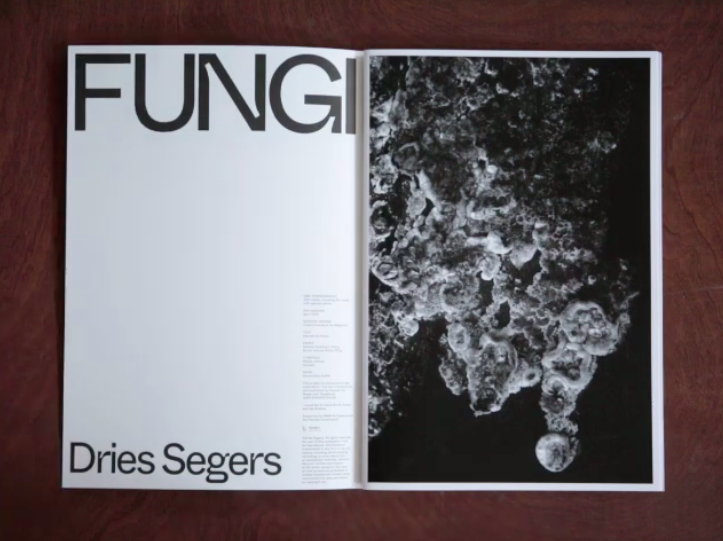 artist book, dmw gallery, dries segers, fungi