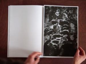 dries segers, fungi, dmw gallery, artist book