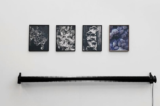 dries segers, poppositions, dmw gallery, photography, fungi