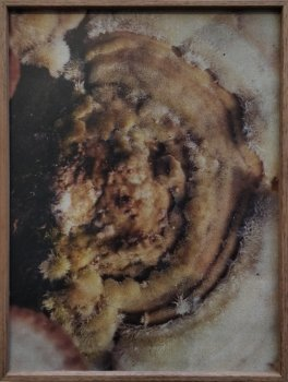 dries segers, dmw gallery, fungi, photograph