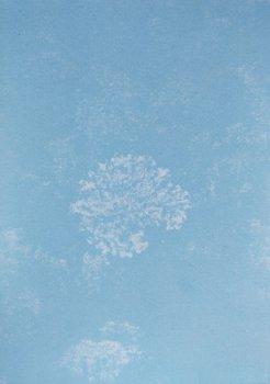 dries segers, dmw gallery, photograph, lichen