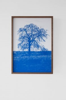 dries segers, grensbomen, dmw gallery, photograph