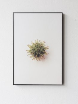 dries segers, dmw gallery, seed, edition, photography