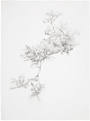 joris vanpoucke, dmw gallery, magnolia, drawing