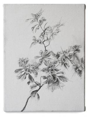 joris vanpoucke, dmw gallery, plant