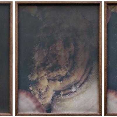 dries segers, fungi, dmw gallery